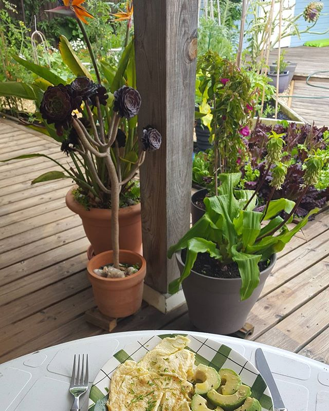 Breakfast with a view  Omelette with chives and avocado,  Bird of Paradise plant,  Pineapple Lily,  Bougainvillea  and my vegetable garden just seen behind.