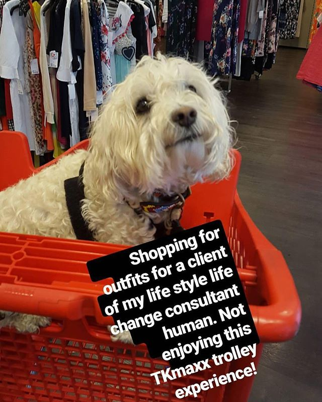 When your human lifestylist is shopping for a client.... And you get dragged along too on the pretext its a walk.