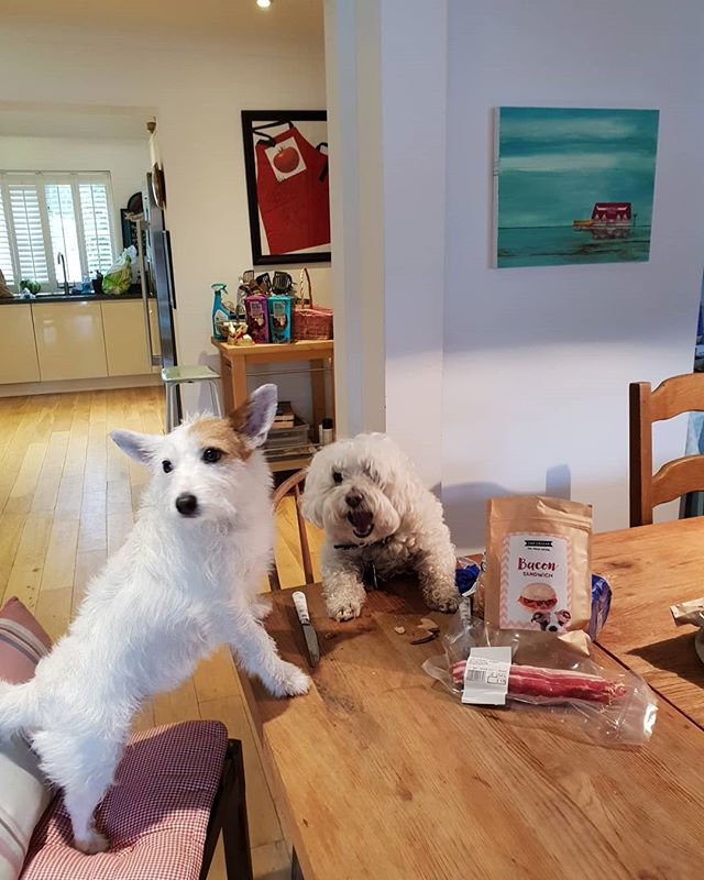 Happy Easter from us!  Our humans have already given each other their Easter eggs. And they've given us super healthy gluten free  @topcollarbox treats.  x x