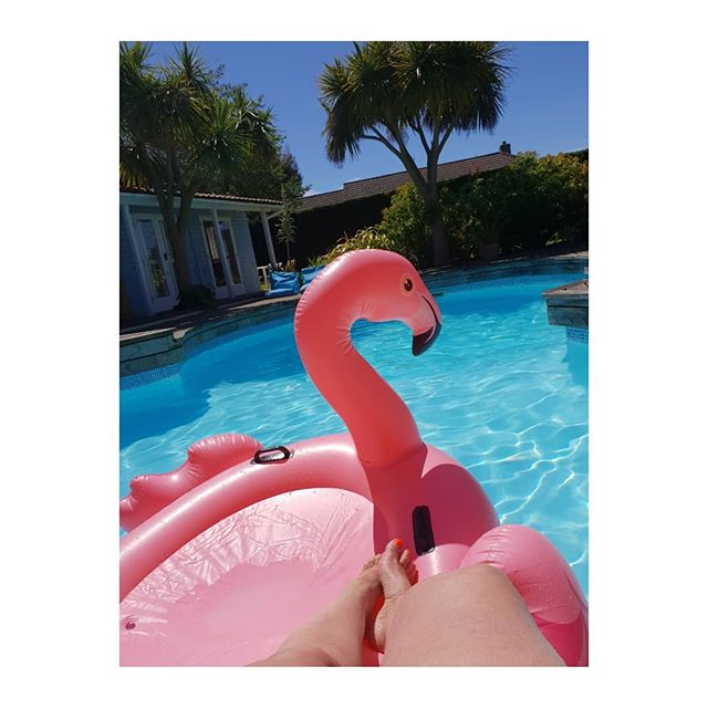 Pink flamingo poolside.  This could be somewhere abroad but this is my pool in the Isle of Wight in the UK whilst we are having a weekend heatwave. . . . . . .