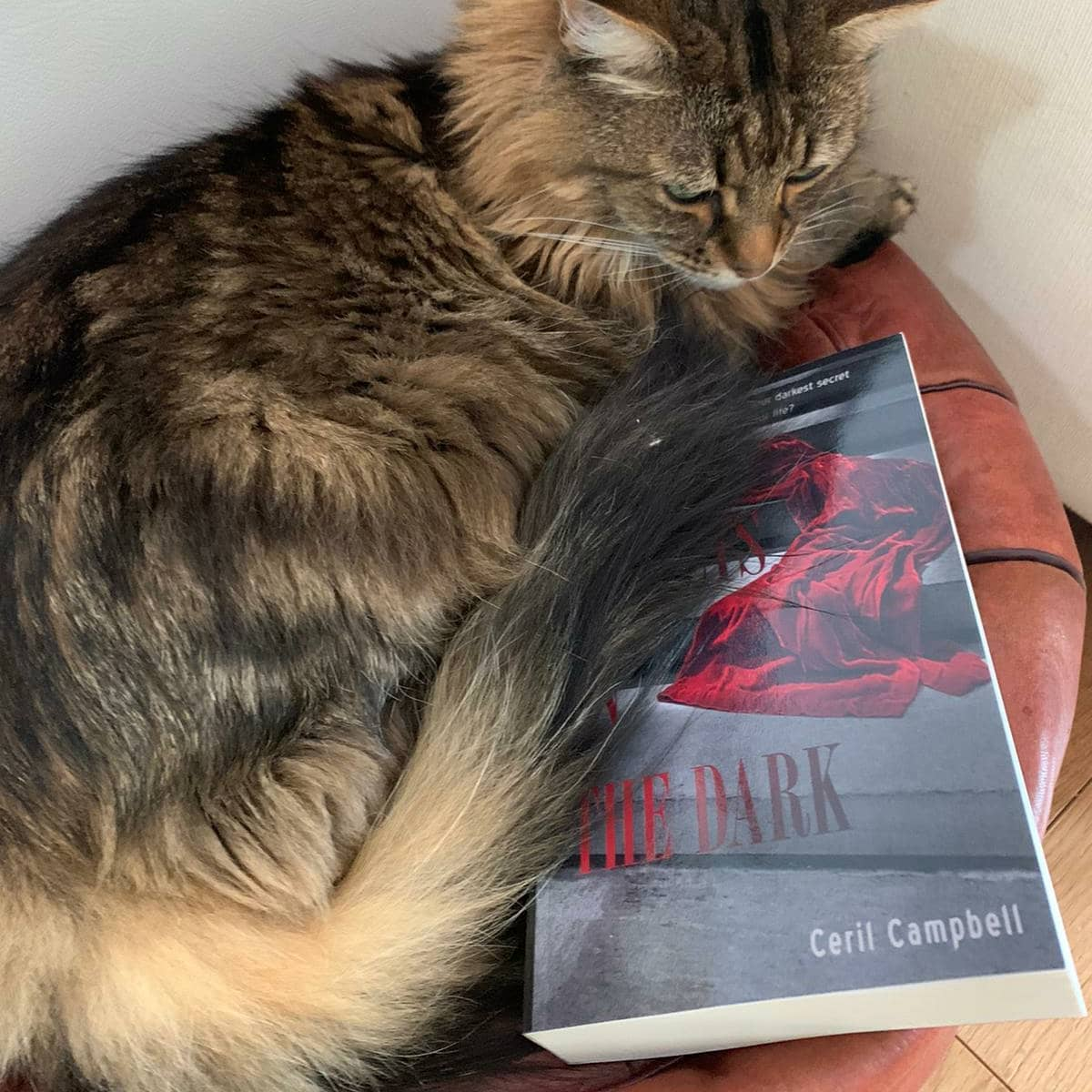 My debut novel 'Secrets in the Dark' has just been bagsied to read by Luna the cat before her human even started to read it.    The book is just published and available on Amazon as a Kindle or paperback.  I hope you will enjoy it as much as Luna and if so - I will be thrilled if you can spread the word on Amazon rated reviews and any social media.  Synopsis: The Kings Road, Chelsea in 1970's London is the epicentre for fashion, music and unlikely friendships - where it's now cool for posh, privileged girls to mix outside their social circles. When two such teenagers meet and form a close and sisterly bond, their worlds are unexpectedly and suddenly torn apart as they each suffer personal traumas. Needing to escape London to hide their shameful secrets, they embark upon individual rollercoaster journeys of extreme highs and lows that take them to Paris, Los Angeles and the South of France, where men are rich, sex is a commodity, drugs are a way of life and a glamorous celebrity lifestyle is optional.   'A gripping page-turner that I just couldn't put down.'  'Ceril's vivid descriptions of life on and around the Kings Road Chelsea in the '70s transported me back in time.  'Absolutely immersed myself into this book, the twist at the end took me utterly by surprise.'    #1970's
